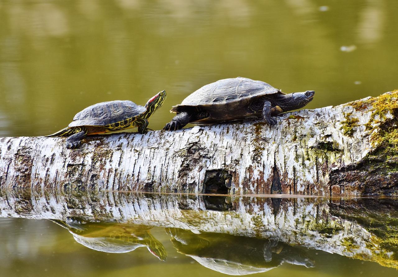 Привычка черепахи